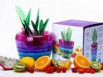 گلدان جادویی Fruits Plant وسیله ای شگفت انگیز با ۱۰ کاربرد متفاوت